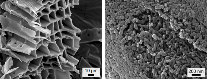 Scanning electron microscope images of the carbon made from sawdust