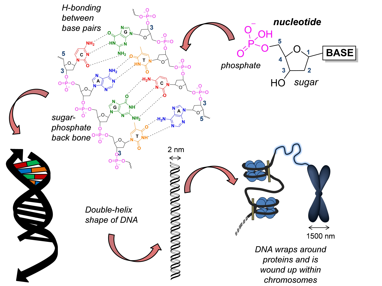 DNASchematics
