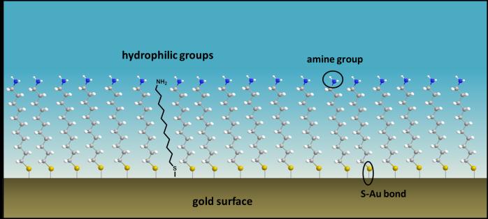 hydrophylic2