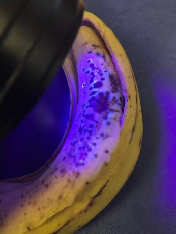 fluorescent banana