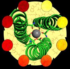 peptide Gd