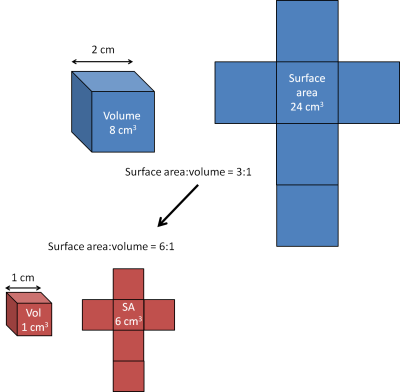 Image describing surface to volume ratio concept