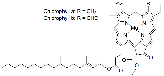 Structure of Chlorophyll a and b