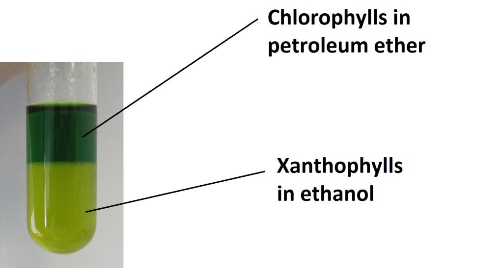 LLE of Chlorophylls and Xanthophylls